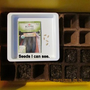 Seeds I can see