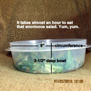 Bowl full of salad
