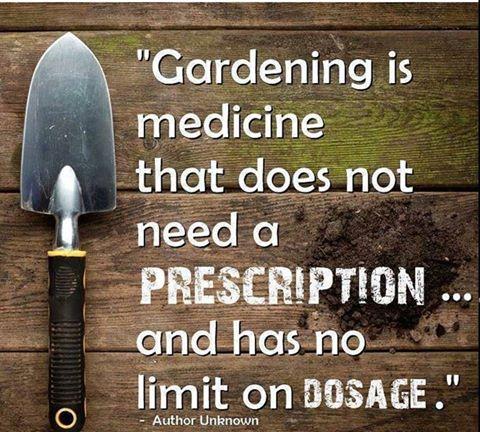 Gardening is medicine (poster)