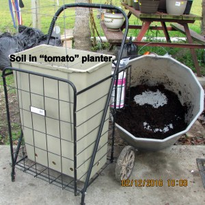 Soil in tomato planter