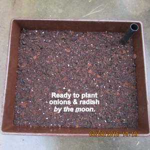 Ready to plant by the moon