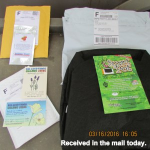 More seeds arrived in the mail