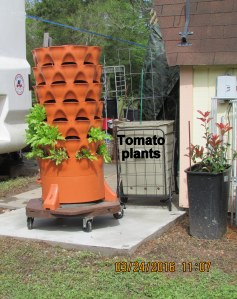 Garden Tower and tomato planter