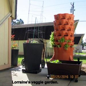 Lorraine's veggie garden (1)