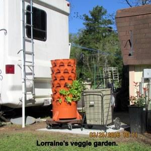 Lorraine's veggie garden (2)