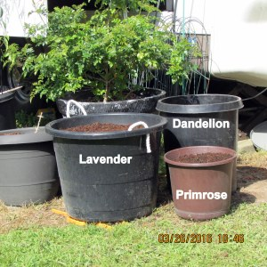 Three planters prepared with seeds