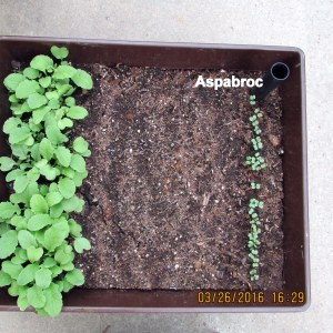 Aspabroc on March 26