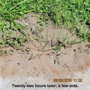 Very few ants