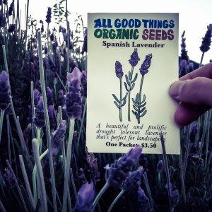 Lavender seeds ordered March twelve sixteen (2)