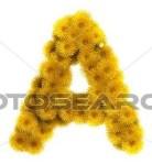 Letter A dandelions