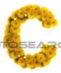 Letter C dandelion