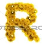 Letter R dandelions