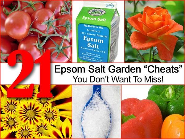Epsom Salt garden info (poster)