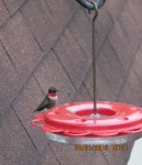 First Hummingbird of the season