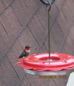 First Hummingbird of the season