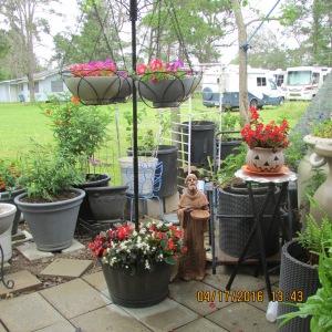 Begonia, Petunia, etc.