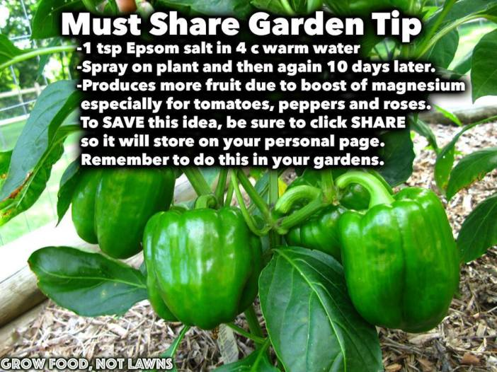 Garden Tip (poster)
