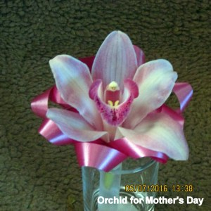 Orchid for Mother's Day