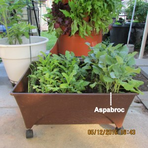 Aspabroc in Patio Picker