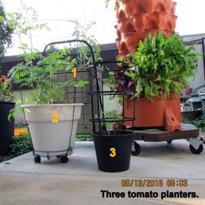 Three tomato planters