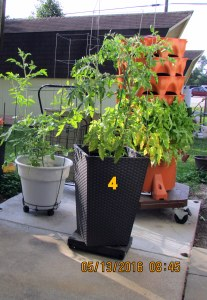 Fourth tomato planter