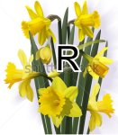 Letter R with daffodils