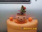 Smiley face Begonia on T@B propane tank