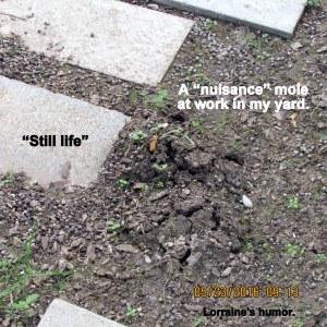 Mole at work in my yard