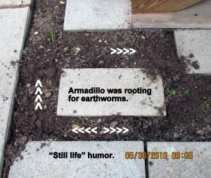 Armadillo diggings