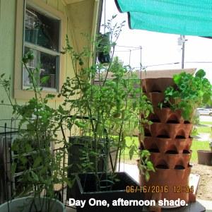 First day under shade