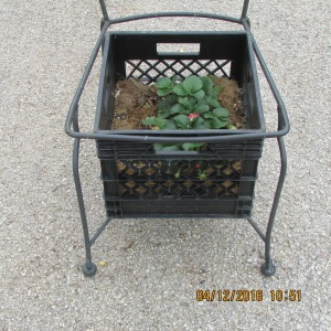 Planter on a chair (2)
