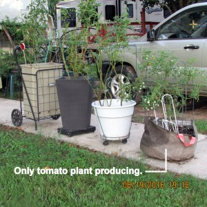 Four in a row tomato planters